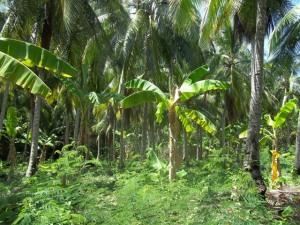 Pepohonan yang rimbun di Pulau Samber Gelap
