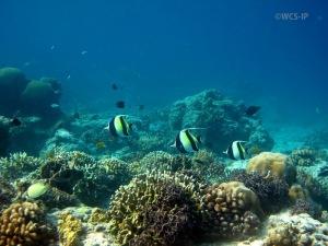 WCS_CRS_Lombok-1