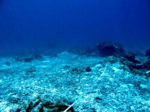 Pecahan Karang pada lokasi A di Pulau Ternate
