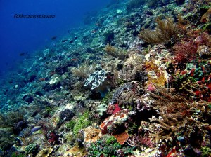 Pulau Ternate (Credit foto oleh Bang Ubun)
